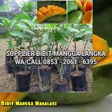 Profile for Jual Bibit Mangga Arumanis