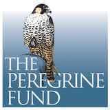 Profile for The Peregrine Fund