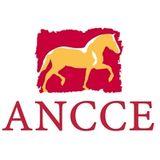 Profile for ANCCE