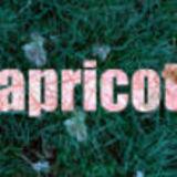 Profile for Apricot Magazine