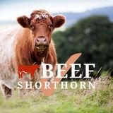 Profile for beefshorthorn