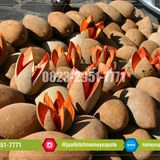 Profile for +62 823-2951-7771 | Bibit Pohon Buah Langka