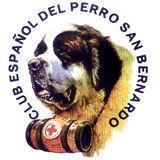 Profile for Club Español del Perro San Bernardo