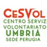 Profile for cesvol