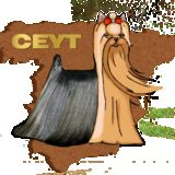 Profile for ceyt2013