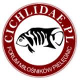 Profile for Cichlidae.pl
