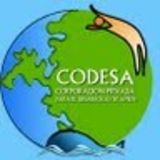 Profile for codesa