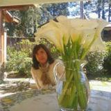 Profile for Cristina Argentim
