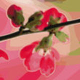 Profile for de zoele haven