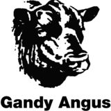 Profile for Gandy Angus