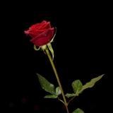 Profile for Dino Tinelli
