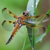 Profile for Dragonfly Archive