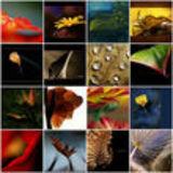 Profile for Eco Files