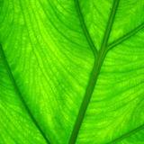 Profile for Ecozine