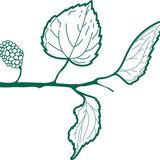 Profile for Edicions Morera