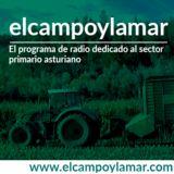 elcampoylamar