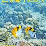 Profile for Exotica Magazine