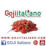 GOJI ITALIANO