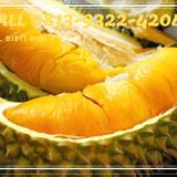 Profile for grosir bibit durian  musangking