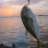 Gulf Shores Fishing Charters