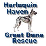 Profile for Harlequin Haven Great Dane Rescue
