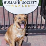 Profile for Humane Society Naples