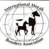 Profile for International Morab Breeders' Association