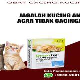 Profile for jualobatcacingkucingterpercaya