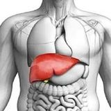Profile for Liver Support