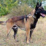 Profile for Marysville Dog Training