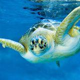 Profile for Mote Marine Laboratory and Aquarium