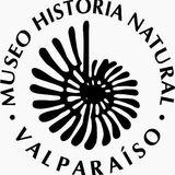 Profile for Museo de Historia Natural de Valparaiso