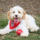 Profile for NC State Veterinary Medicine