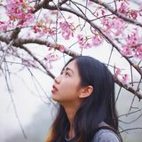 Profile for Sarocha Tiansri