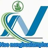 Profile for nsonongbualamphu