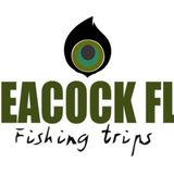 Profile for Peacock Fly - Fishing Trips