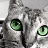 Profile for PETmedia