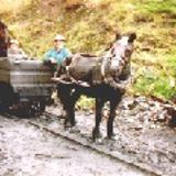 Pit Pony Sanctuary