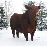 Profile for Redline Livestock