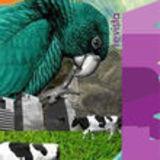 Revista  Fauna