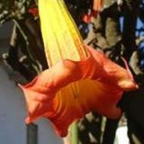 Profile for Flor  del Guanto