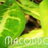 Profile for Revista literária Macondo