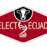 Profile for Select Ecuador