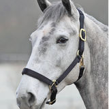 Profile for Shires Equestrian USA
