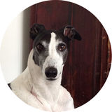 Profile for Sighthound Ezine