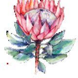 Profile for Sister Lilian Centre