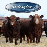 Profile for Soderglen Ranches Ltd.