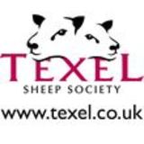 Profile for Texel Sheep Society Ltd