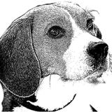 Profile for The Beagle Weekly