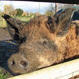 The Farm Animal Sanctuary